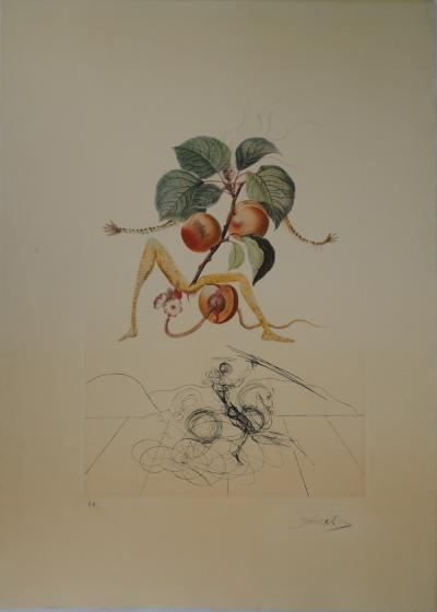 Salvador Dali : Flordali, L'abricot chevalier - Original lithograph and etching
